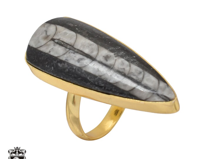 Size 8.5 - Size 10 Adjustable Orthoceras Fossil 24K Gold Plated Ring GPR462