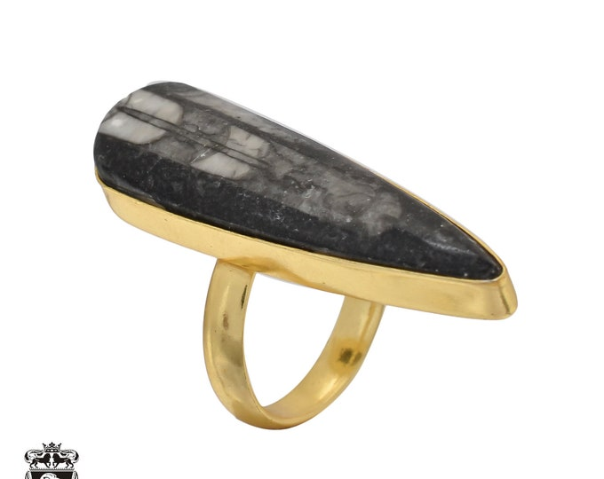 Size 6.5 - Size 8 Adjustable Orthoceras Fossil 24K Gold Plated Ring GPR473