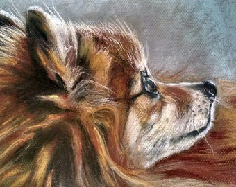 Custom pet portrait commissioned hand painted in pastels Pomeranian