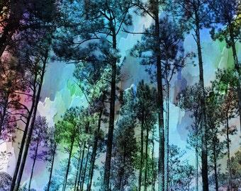 Georgia Pines