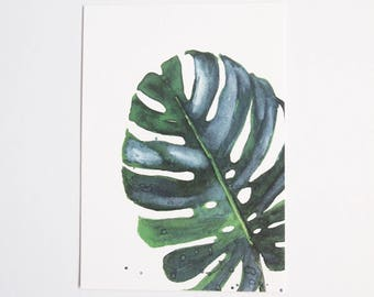 Botanical: Monstera