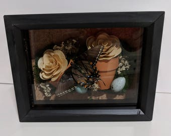 Nature Pot-Egg-Butterfly-Rose Shadowbox