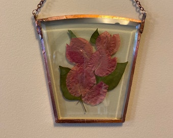 Hanging Pressed Dried Flower Art in Beveled Glass with Pink Bougainvillea