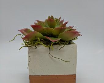 Encrinite Succulent in Stone Cube