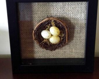 Wooden Black Shadowboxwith Bird's Nest