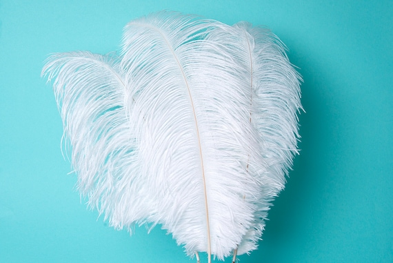 """10 Turquoise Ostrich Tail Large Feathers Centerpiece Halloween Costume 12-16/"""""""