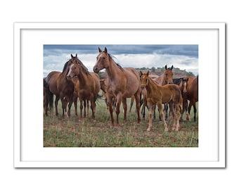 Quarter Horses Mares and Foals
