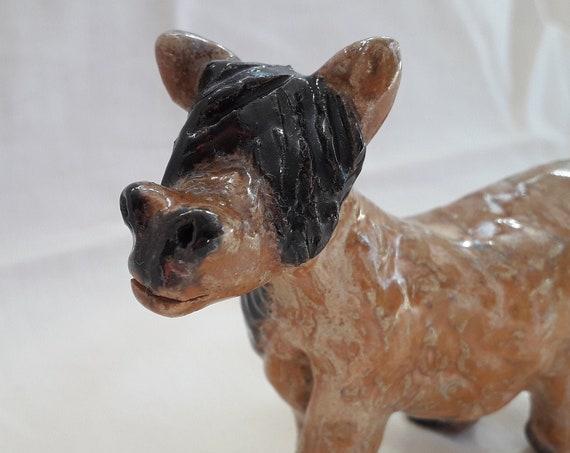 Shetland Shaggy pony