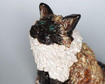 Shaggy Ragdoll Cat