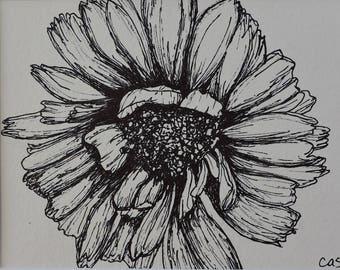 Cordial Calendula - Original Matted Ink Drawing