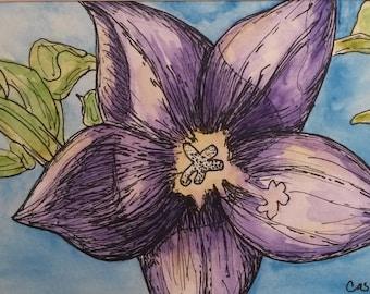Beautiful Balloon Flower - Original Matted Painting