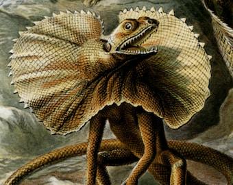 Scientific Art, Art Scientific, Lizards Reptiles, Lizards Art, Reptiles Lizards, Reptiles Art, Art Lizards, Art Reptiles, Ernst Haeckel, Art