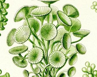 Green Algae, Seaweed Algae, Algae Green, Algae Seaweed, Green Algae Seaweed, Green Seaweed, Seaweed Green, Algae Art, Seaweed Art, Art Green