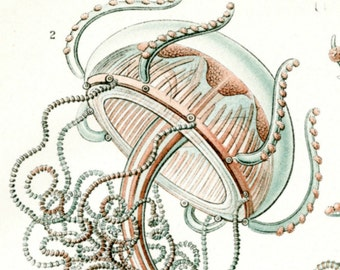 Ernst Haeckel, Ernst Haeckel Jellyfish, Jellyfish Illustration, Haeckel Ernst, Ernst Haeckel Illustration, Haeckel Jellyfish, Jellyfish Art