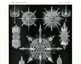 Microscopic Life, Marine Life, Microscopic Marine Life, Life Marine, Ernst Haeckel, Haeckel Radiolaria, Radiolaria Haeckel, Haeckel Ernst