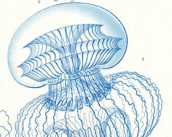 Jellyfish Drawing, Jellyfish Illustration, Drawing Jellyfish, Vintage Jellyfish, Vintage Drawing, Vintage Illustration, Illustration Drawing