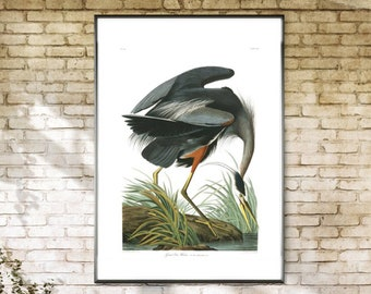 Great Blue Heron, Art Print, Blue Heron, Great Heron, Audubon Great Blue Heron, Audubon Blue Heron, Audubon Heron, Heron Blue, Great Blue