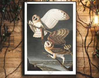 Barn Owl, James Audubon, Barn Owl Print, Barn Owl Wall Hanging, James John Audubon, Bird Art, Bird Prints, Owl Art, Owl Prints, Audubon Art