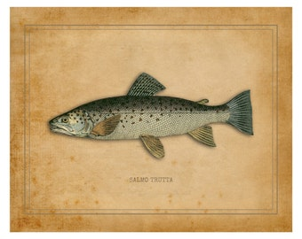Fish Art Print, Fishing, Fishing Gifts for Men, Trout, Fresh Water, Fly Fishing Gifts, Fish Print, Brown Trout Gifts, Fishing Decor, Fish