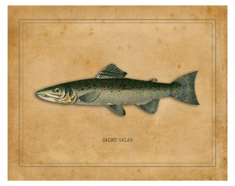 Salmon Print, Fly Fishing, Salmon, Fresh Water, Fly Fishing Gifts, Fish Print, Salmon Gifts, Fly Fishing Art, Atlantic Salmon Artwork