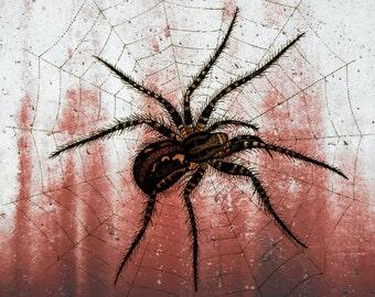 Spider Web, Web Art, Web Spider, Spider Web Art, Halloween Spider Web, Halloween Spider, Halloween Art, Spider Art, Spider Web Halloween
