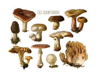 Fungi Art, Botanical Mushroom Print, Kitchen Decor, Botanical Print, Kitchen Art, Botanical Illustration, Nature Art Print, Mycology, Fungus