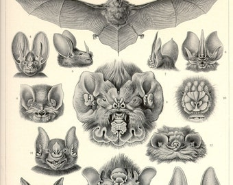 Vampire Bats, Art Nouveau, Art Print, Ernst Haeckel, Vintage Illustration, Bat Art, Chiroptera, Wall Art, Bat Art Print, Educational Art