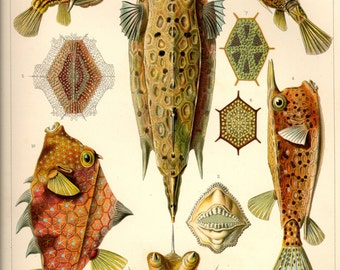 Scientific Illustration, Fish Illustration, Fish Scientific, Scientific Illustration Fish, Scientific Fish, Fish Print, Illustration Fish