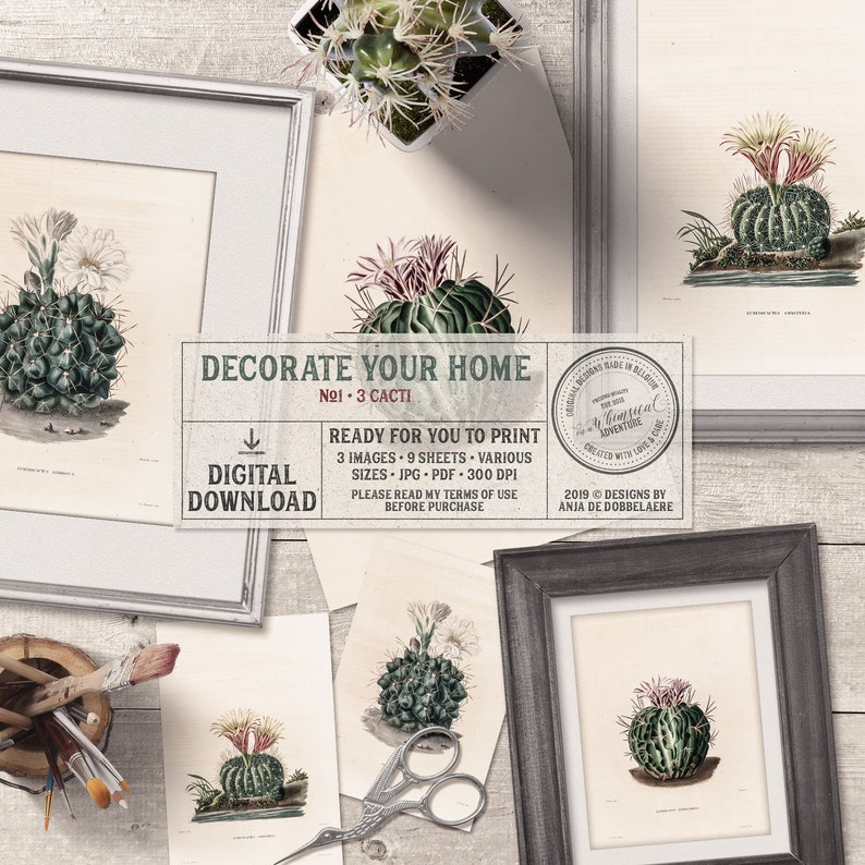 Antique Cactus Illustration Set Of 3 Printable Vintage image 0