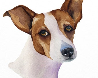 jack russell original watercolor painting  size 9 x 12 in (23 x 31 cm)