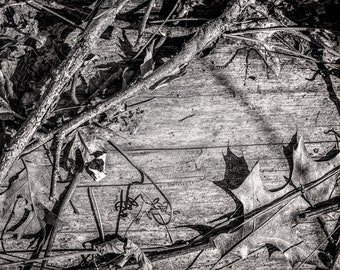 DEAD LEAVES | photograph
