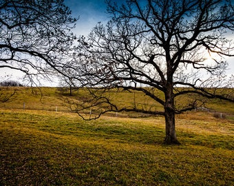 z| FARM TREE 01