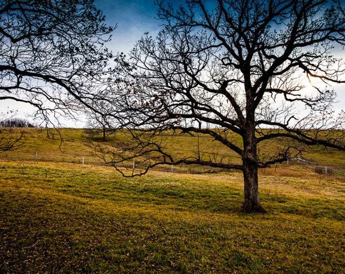 FARM TREE 01