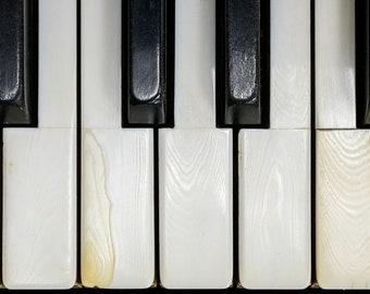 PIANO KEYS | photograph