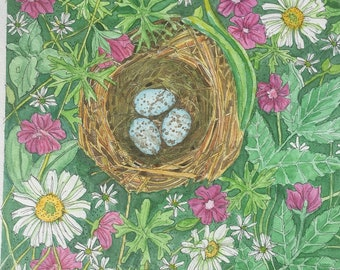 Hermit Thrush Bird Nest