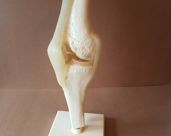 Vintage anatomical model of a knee made in West Germany by Somso