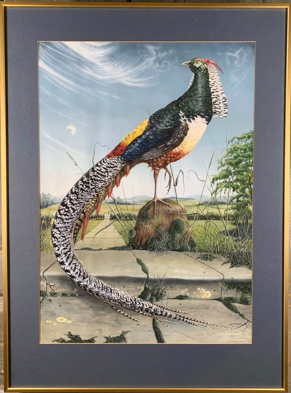 Modern British Mixed media Pheasant painting by Jonathan Minshull dated 1981