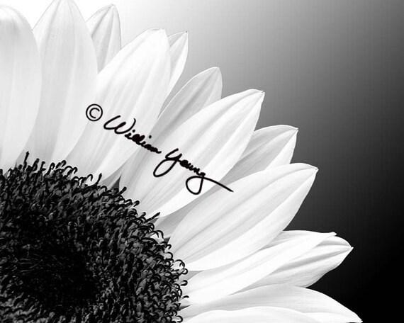 Sunflower In Black White Sunflower Photo Sunflower Etsy