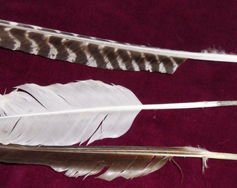 Handcut Feather Quill Pen Cut to Order