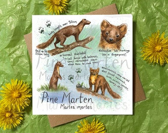 Pine Marten Greeting Card - Birthday / Anniversary / Thank You / Special Occasion / blank card for nature mammal animal lover