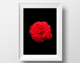 Rose in the Darkness / Love / Valentine / Flower / Beauty / Red / Romance