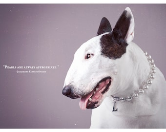 Always Appropriate - Bull Terrier Photographic Art Print