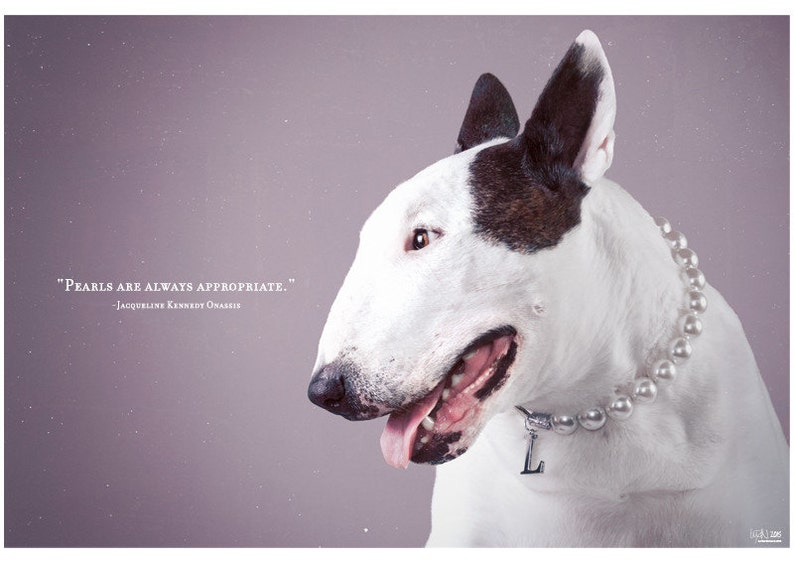 Always Appropriate  Bull Terrier Photographic Art Print image 0