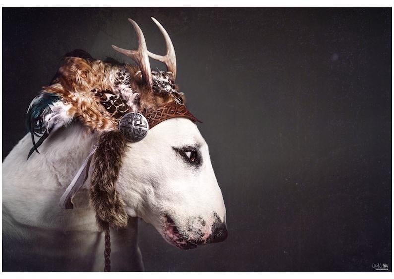 Wild At Heart  Bull Terrier Photographic Art Print image 0
