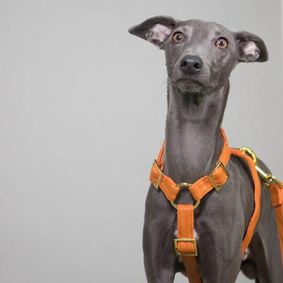 Harnais pour chien élégant ORANGE CRUSH en cuir artificiel - à la main en Allemagne