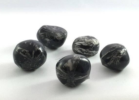 Polished CHRYSANTHEMUM  STONE// Tumbled Stones// Healing Gemstone// Healing Tools// Home Decor// Root Chakra// Grounding Stone