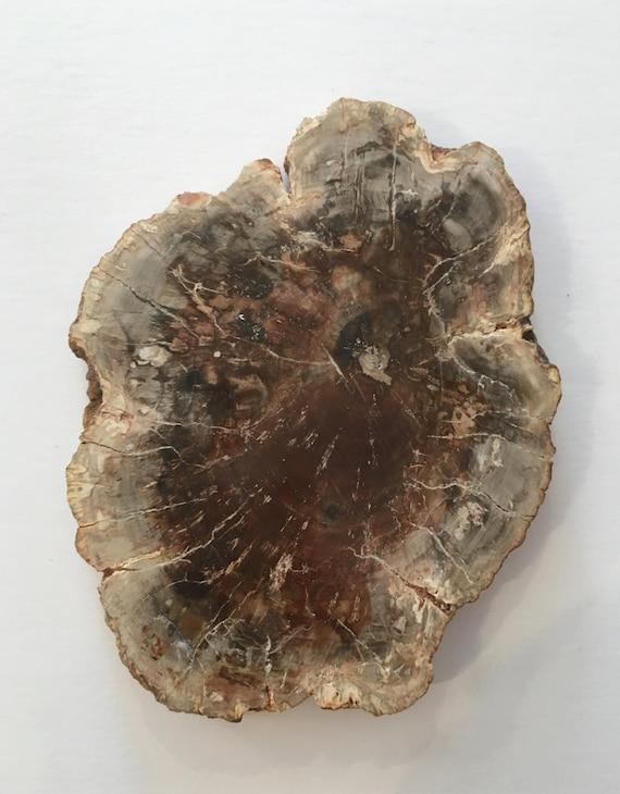 PETRIFIED WOOD// Fossilized Wood// FOSSILS// Healing Gemstones// Healing Tools// Healing Fossils// Healing Tools// Sliced Petrified Wood