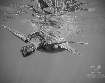 Sea Turtle Photo, Maui, Hawaii, Ocean, Snorkeling, Travel Photography, Fine Art Photography, Art Prints, Wall Art, Decor, Color or B&W