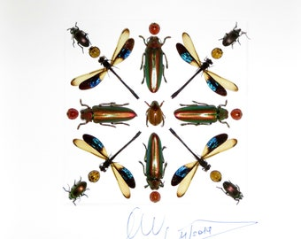 Real insect supplies for art photography by Alanscollectibles