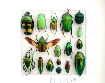 Shadowbox with real insects : Wooden frame with mounted insects , fifty shades of green